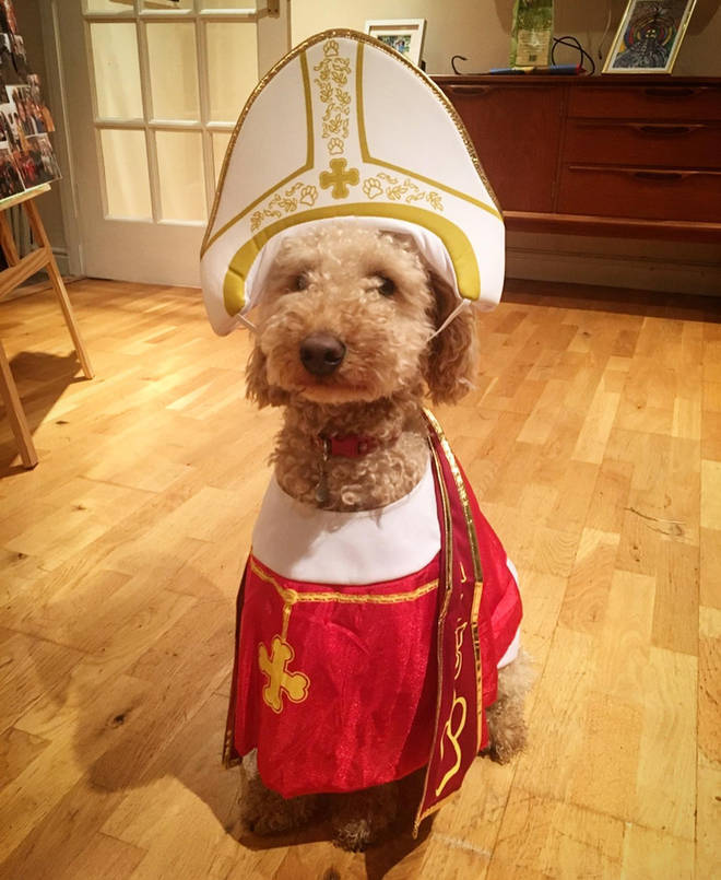Catholic doggo