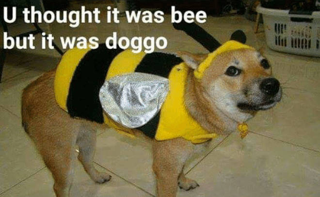 Bee doggo