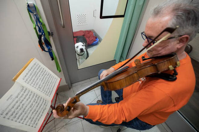 Martin Agee plays Bach for abused dogs. ASPCA